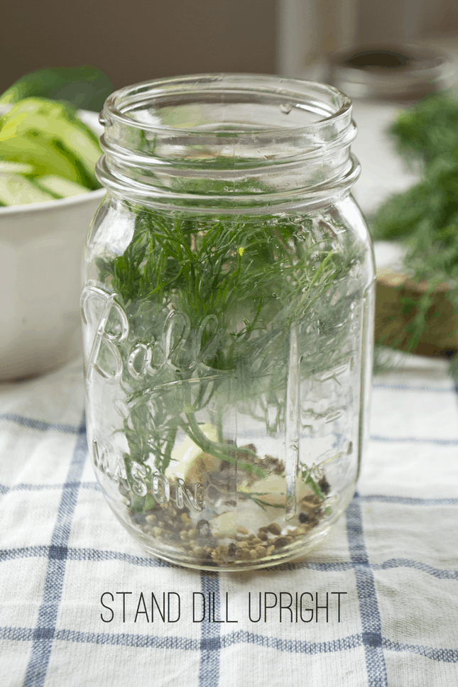 fridge-pickles-dill