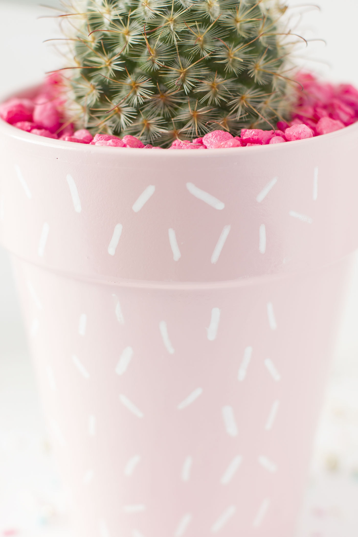 cactus-planter-diy-sprinkle-pink-chic-cute